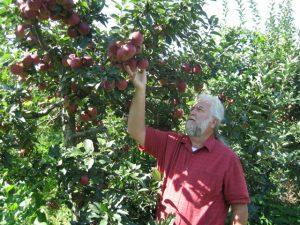 mat.apples