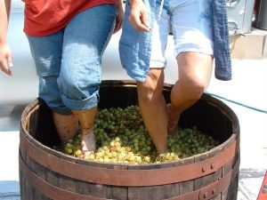 Barefoot Grape Stomping